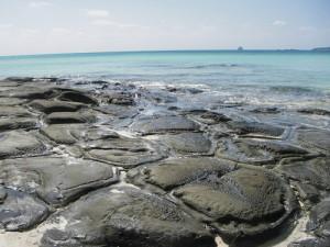 浅瀬の岩場